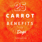 25 Carrot Benefits for Dogs