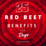 25 Red Beet Benefits for Dogs