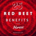 25 Red Beet Benefits for Horses