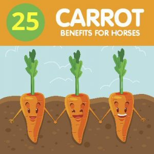 25 carrot benefits for horses