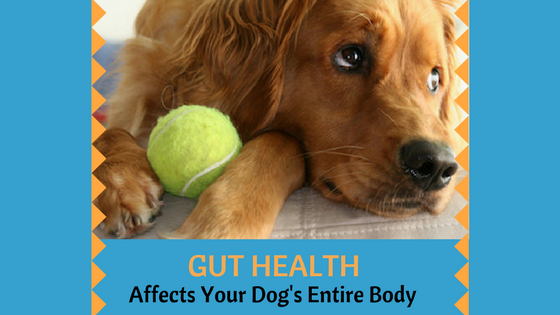 Gut Health in Dogs