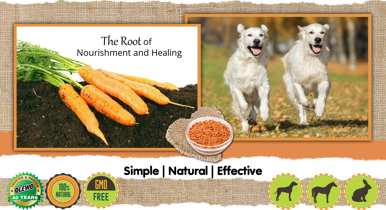 Cure Dog Diarrhea Fast With Olewo Carrots For Dogs