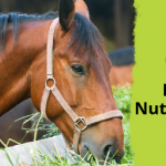 26 horse nutrition tips