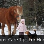 Winter Care Tips For Horses