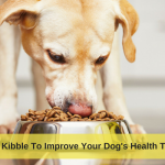 Re-Think Kibble To Improve Your Dog's Health This Year