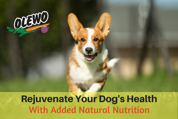 Rejuvenate Your Dog's Health - Blog