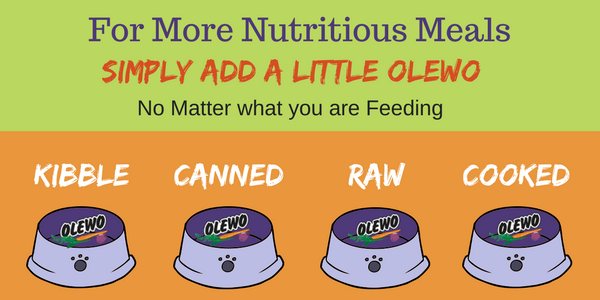 What Foods For Dog Help Their Anal Gland