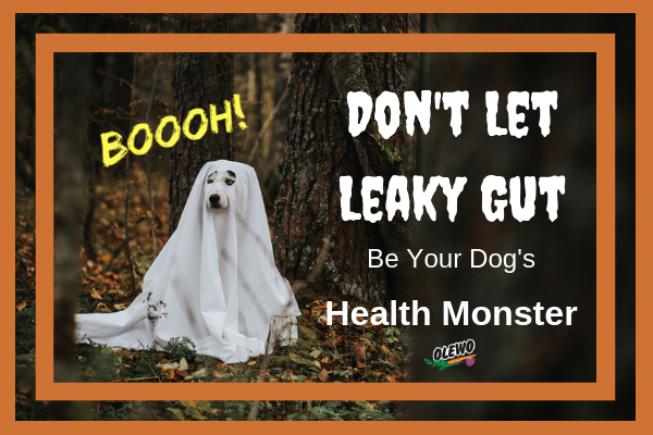 Leaky Gut in Dogs