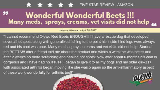 wonderful beets for dogs