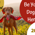 Be Your Dog's Hero