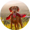 Be your Dog's Hero Icon