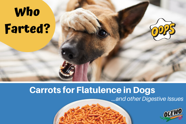 Carrots for flatulence in dogs - Blog