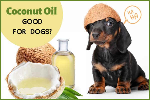 Coconut Oil Good for Dogs - Blog