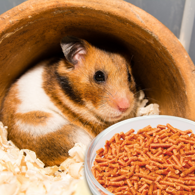 carrots-for-hamsters
