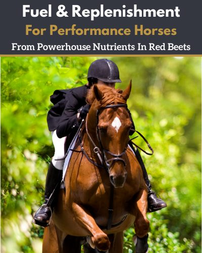 energy for performance horses