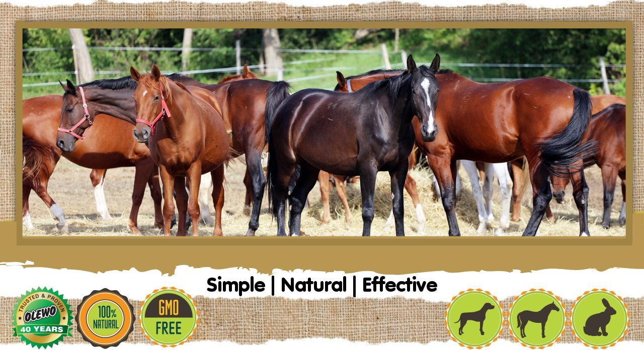 horse products header