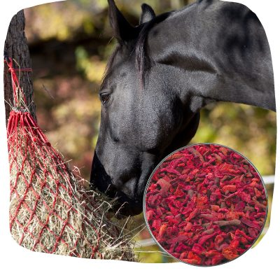 easy to feed beets for horses
