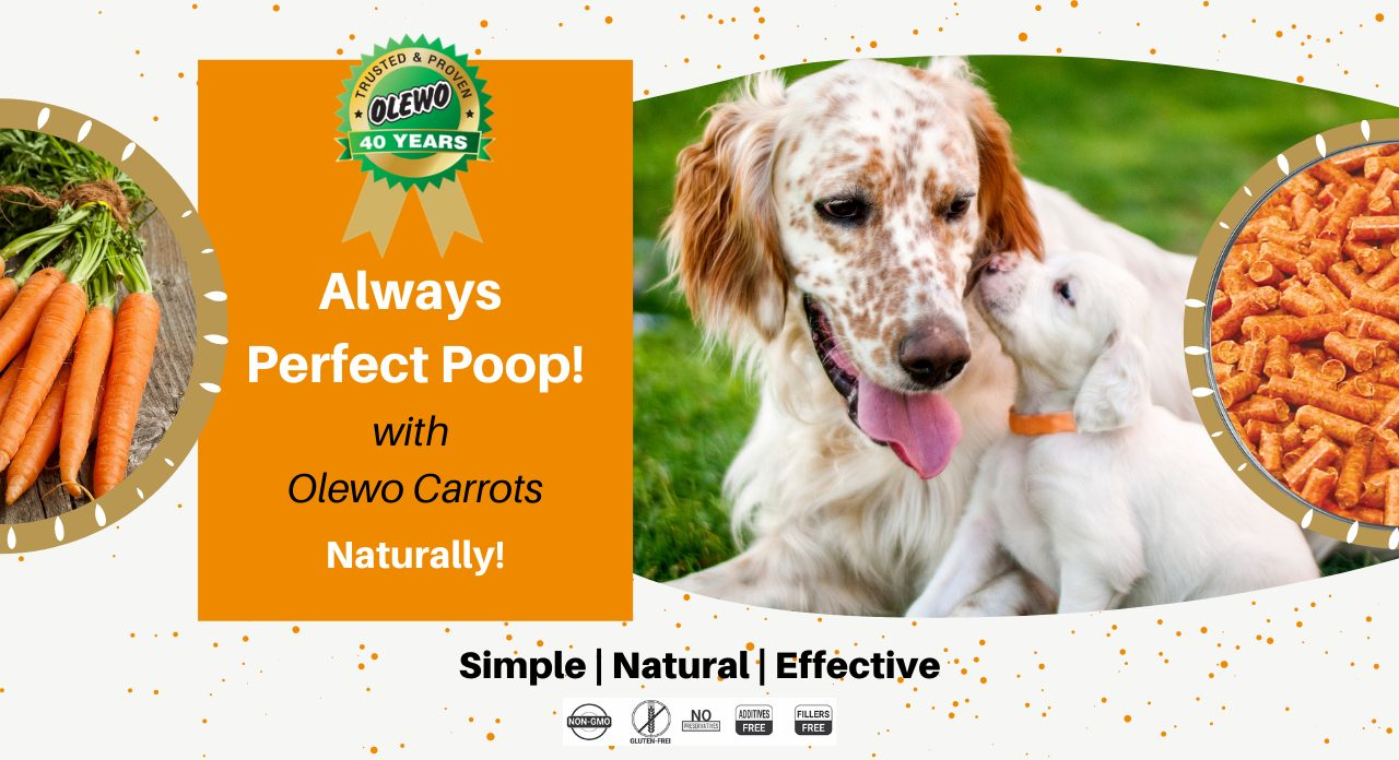 olewo carrots for dogs page