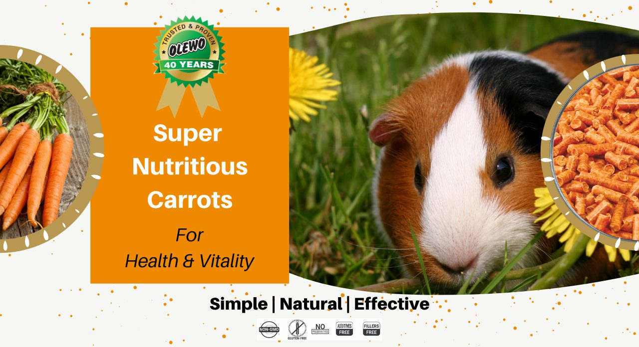 carrots for guinea pigs