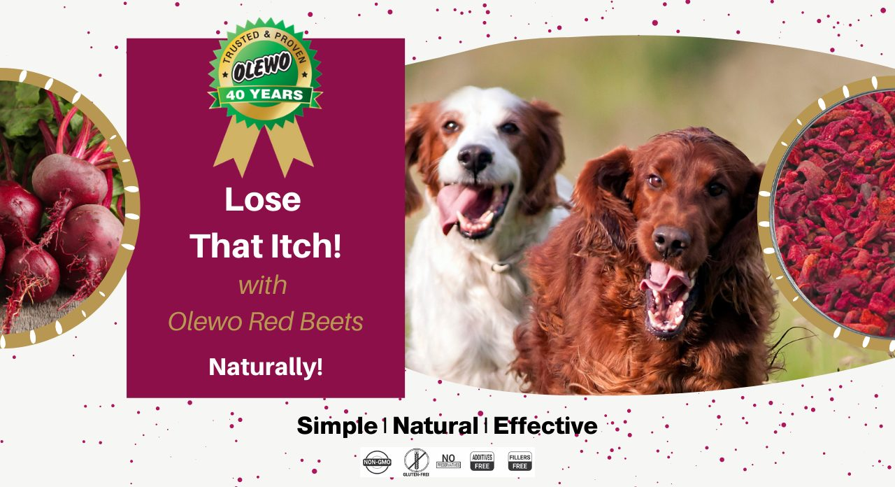 olewo red beets for dogs page