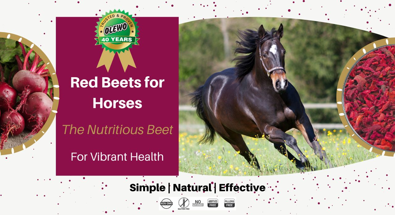 olewo red beets for horses page