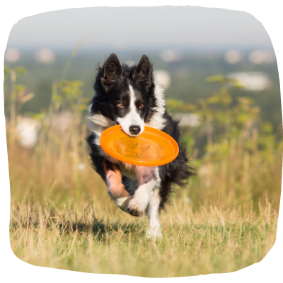 beets for dog immune system