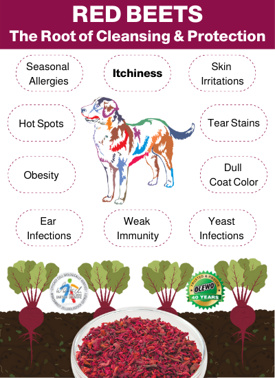 beets for dogs benefits