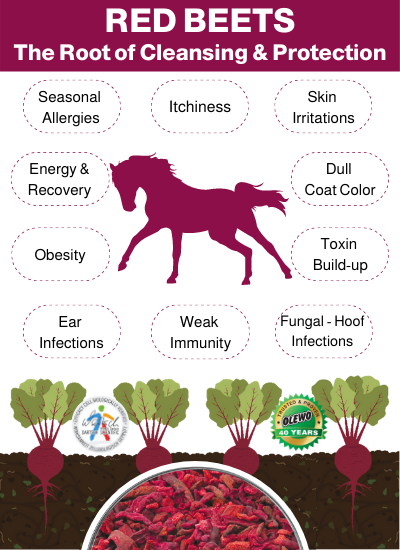 beets for horses benefits