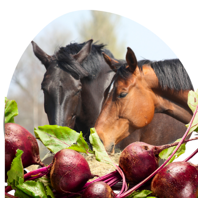 beets for horses