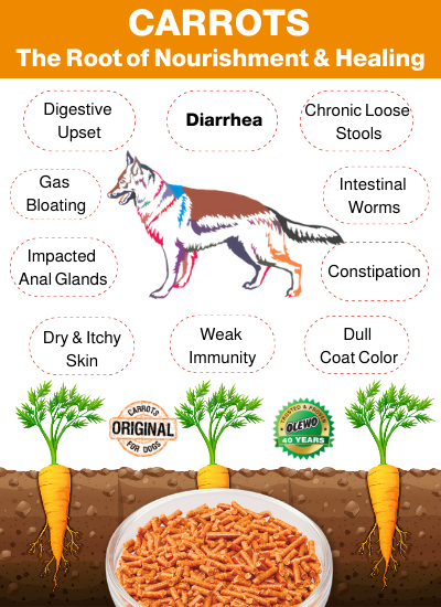 carrots for dogs benefits
