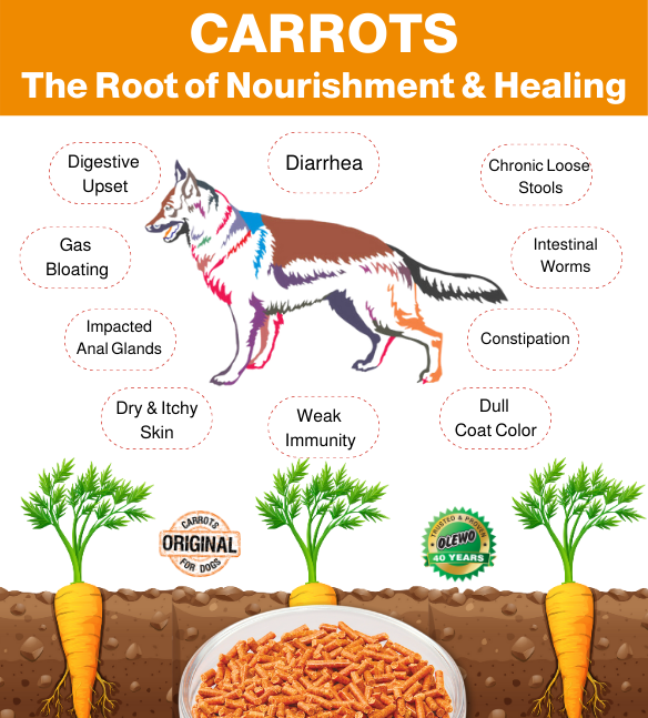 carrots the root of nourishment and healing